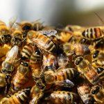 Que faire contre un essaim d'insectes